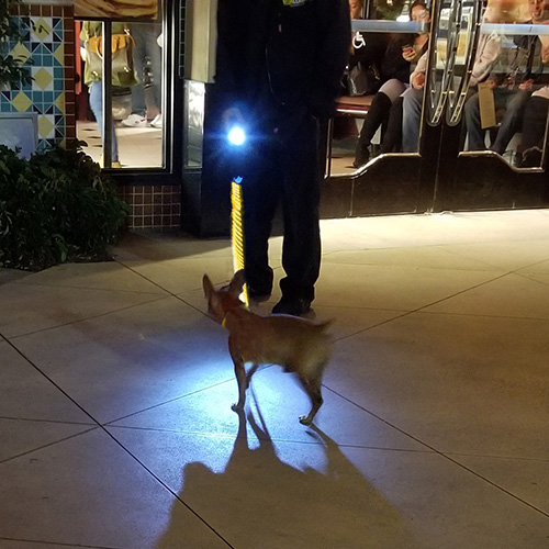 NeonLeash-leash on dog x 500